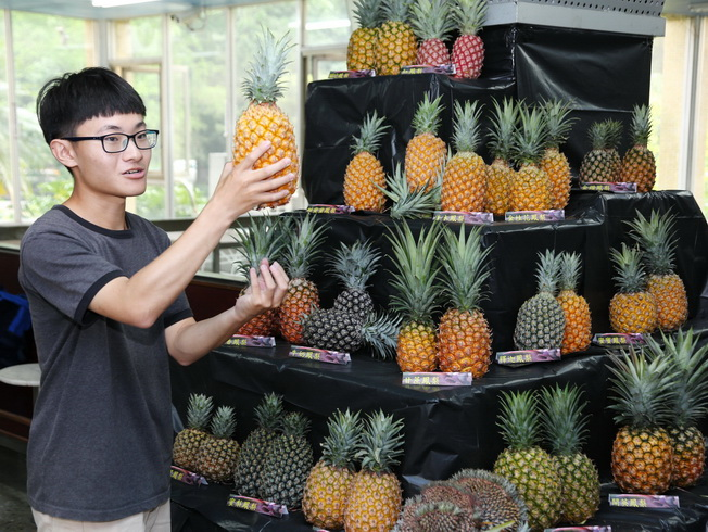 Students of NCYU Department of Horticultural Science introduced a variety of pineapple to the visiting public.