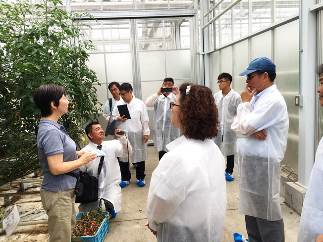 The Japanese staff explained the technology of greenhouse production of small tomatoes to the delegation.