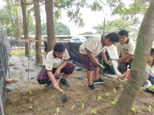 Vegetable growing practice as part of the food and farming education